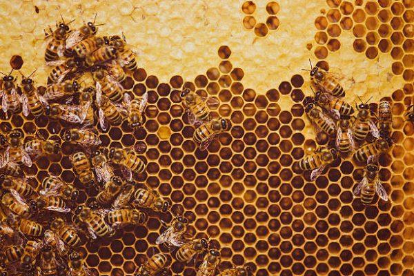 Est-ce que le miel est du vomi d'abeille ?